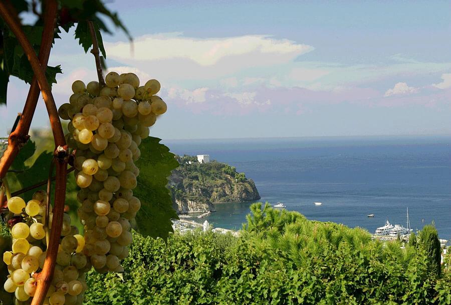 Viticoltura eroica ad Ischia: la vendemmia