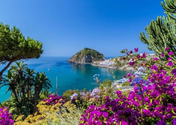 Pipernia ischitana: caratteristiche e proprietà